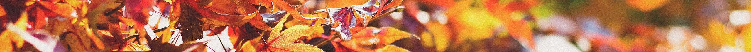 Akciós wellness ajánlatok az Őszi szünet idejére