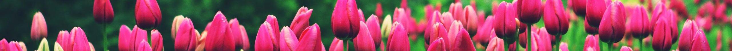 Kedvezméynes tavaszkezdő (ünnep)napok